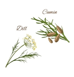 Dill cumin spice herbs isolated icons vector image vector image