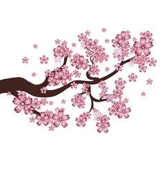 Blooming Sakura Branch vector image