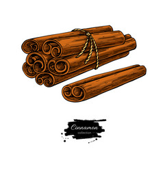Cinnamon stick tied bunch drawing vector