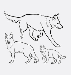 german shepherd pet dog animal sketch vector image