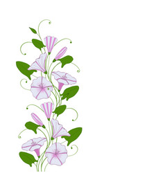 Isolate element for design flower bindweed floral vector