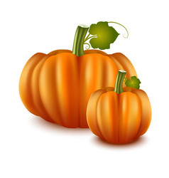 realistic detailed 3d pumpkins set vector image vector image