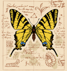 Banner with drawing of a swallowtail butterfly vector