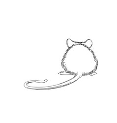 Mouse sketch hand-drawn line art animal isolated vector