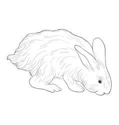 sketch rabbit vector image
