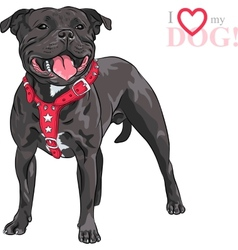 sketch dog Staffordshire Bull Terrier breed vector image vector image