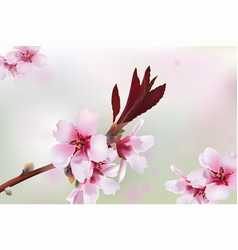 cherry blossom branch spring delicate flowers vector image vector image