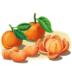 Tangerines one peeled and some cloves vector
