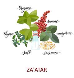 za atar herbs set vector image