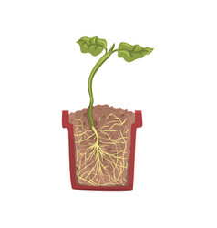 green plant growing in a pot with ground soil vector image