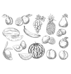 Enjoyable flavorful fresh fruits sketch icons vector image vector image