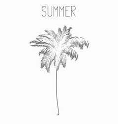Card in white style with a palm tree and the vector