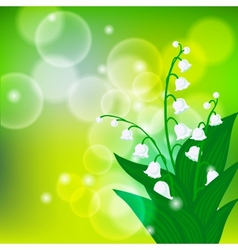 card with field lily-of-the-valley flowers vector image