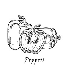 hand drawn of three peppers vector image
