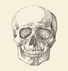 Human skull vintage engraved retro vector