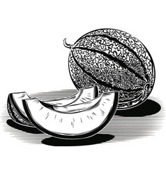 Whole melon and two slices vector