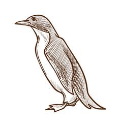 arctic bird penguin isolated sketch flightless vector image