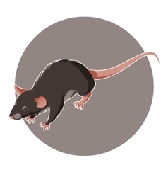 Isometric rat icon vector image