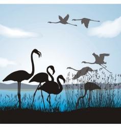 flamingo on lake vector image vector image