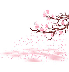 branches of a fading pink cherry sakura the vector image vector image