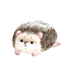 Adorable hedgehog whute background with cute wate vector
