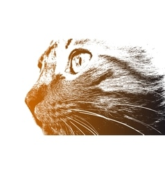 Cat look vector