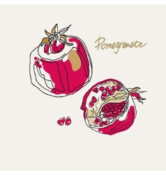 drawing of a stylized pomegranate vector image