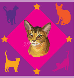seamless pattern with abyssinian cat vector image