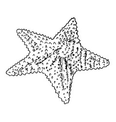 Starfish realistic sketch sea star isolated on vector