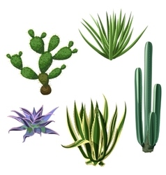 Cactuses and succulents set plants of desert vector