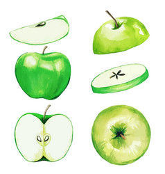 Green apple half and slices watercolor fruit vector