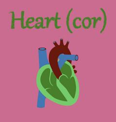 Human organ icon in flat style heart vector