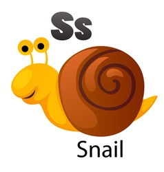 Alphabet S with snail vector image