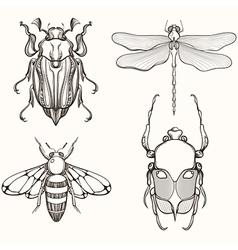 Hand drawn engraving sketch of scarab beetle may vector