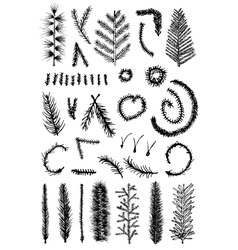 Hand drawn set fir fine branch vector image