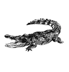 Hand sketch crocodile vector image