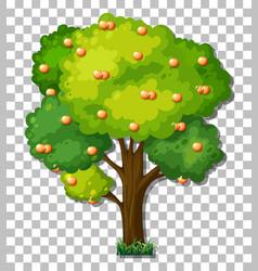 orange tree on transparent background vector image
