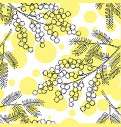 seamless pattern with hand drawn blooming mimosa vector image