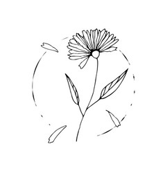 wild flower sketch drawing hand painted by ink vector image