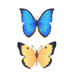 Butterflies collection poster vector