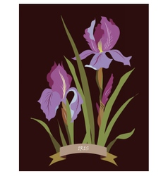 Iris flowers bouquet vector