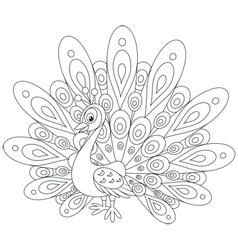Peacock vector image