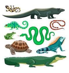 Reptiles and amphibians lizard crocodile turtle vector