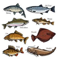 sea and freshwater fish animals isolated sketches vector image