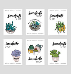 Succulents shop advertising cards collection vector