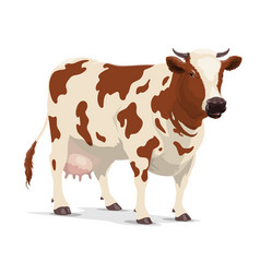 Cow farm animal white and brown heifer cattle vector