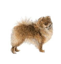 Dog 07 vector image
