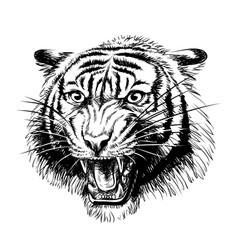 growling tiger graphic hand-drawn portrait vector image