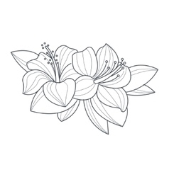 Hibiscus Flower Monochrome Drawing For Coloring vector image