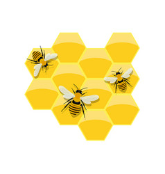 Honeycomb design vector